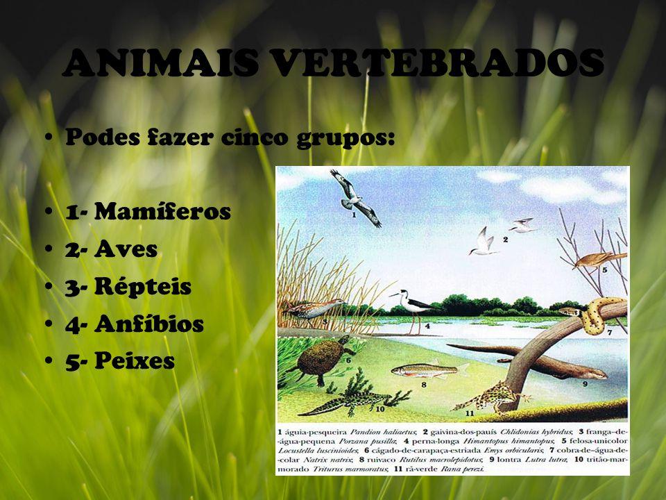 ANIMAIS VERTEBRADOS Podes fazer cinco grupos: 1- Mamíferos 2- Aves