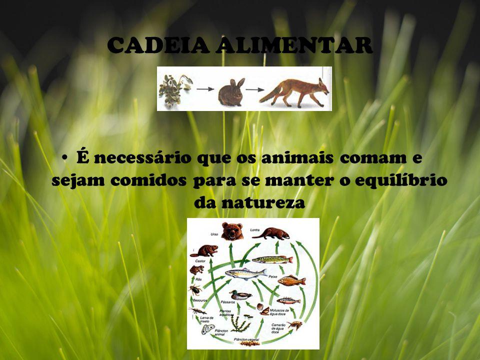 CADEIA ALIMENTAR É necessário que os animais comam e sejam comidos para se manter o equilíbrio da natureza.
