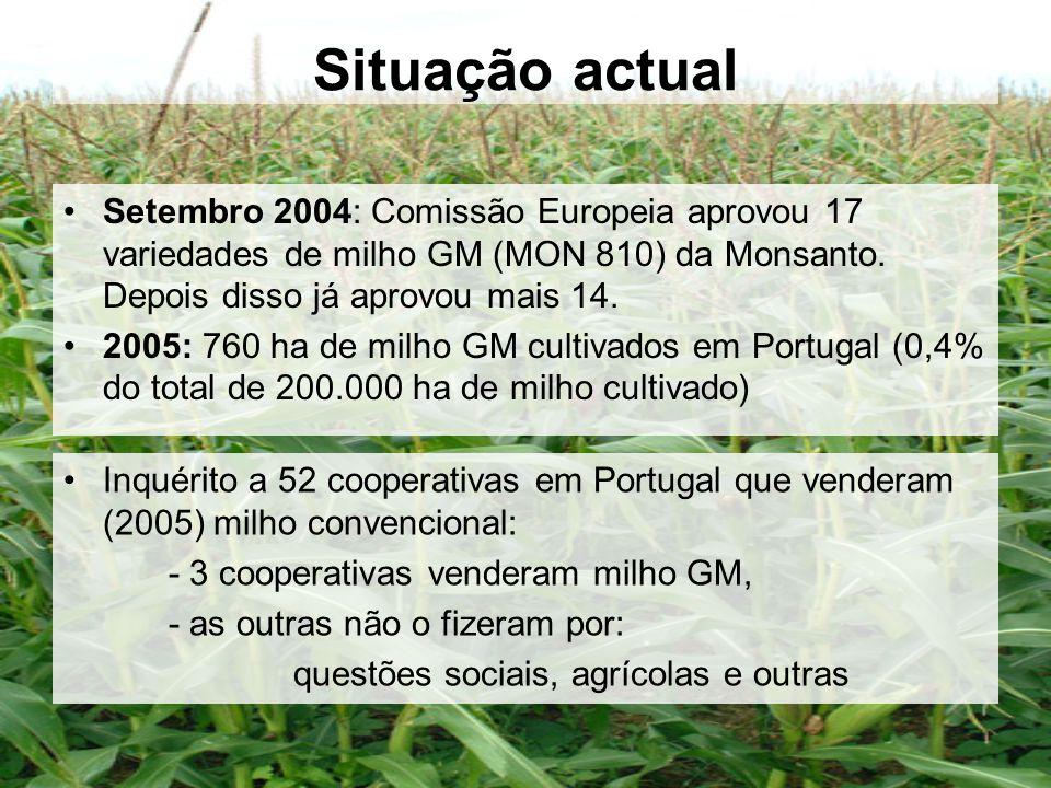 Situação actual Setembro 2004: Comissão Europeia aprovou 17 variedades de milho GM (MON 810) da Monsanto. Depois disso já aprovou mais 14.