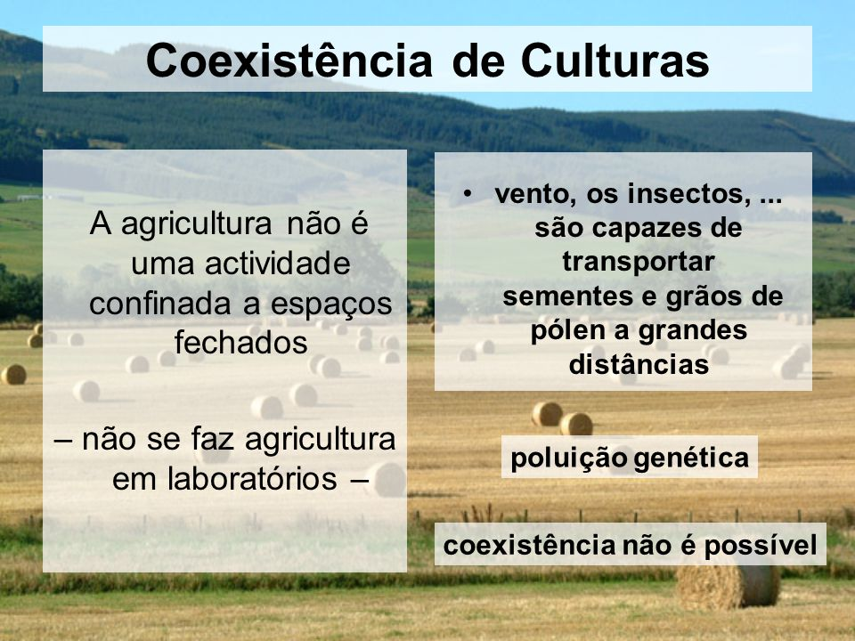 Coexistência de Culturas