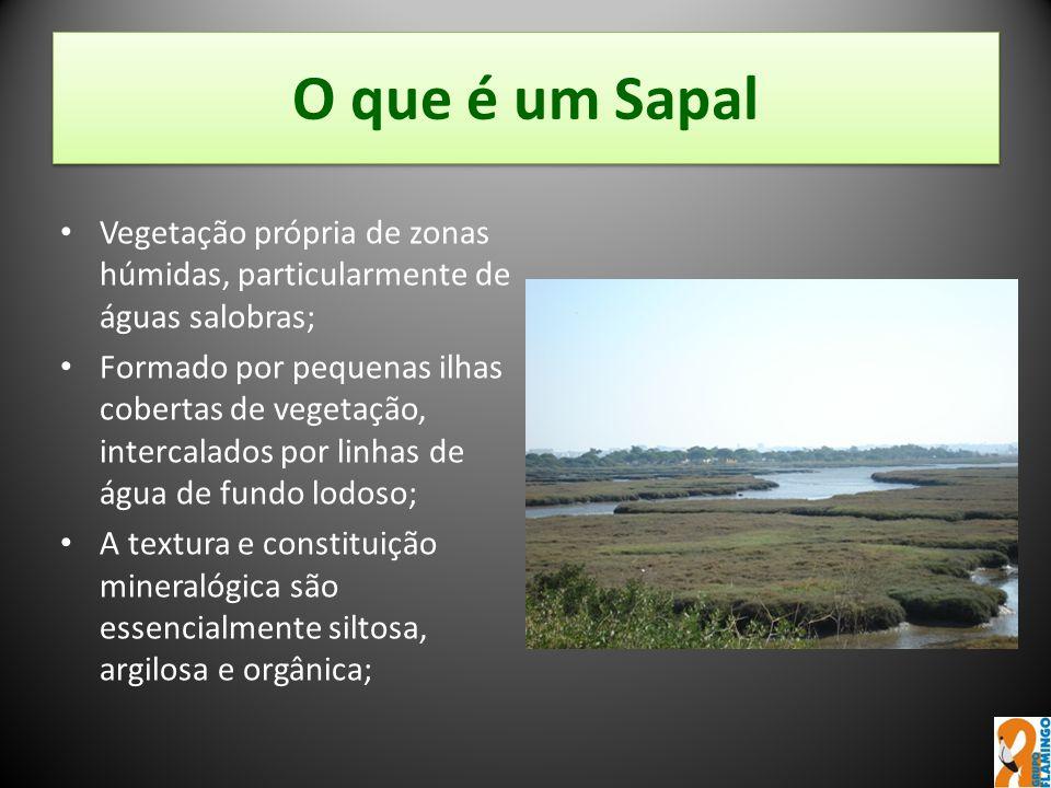 O que é um Sapal Vegetação própria de zonas húmidas, particularmente de águas salobras;