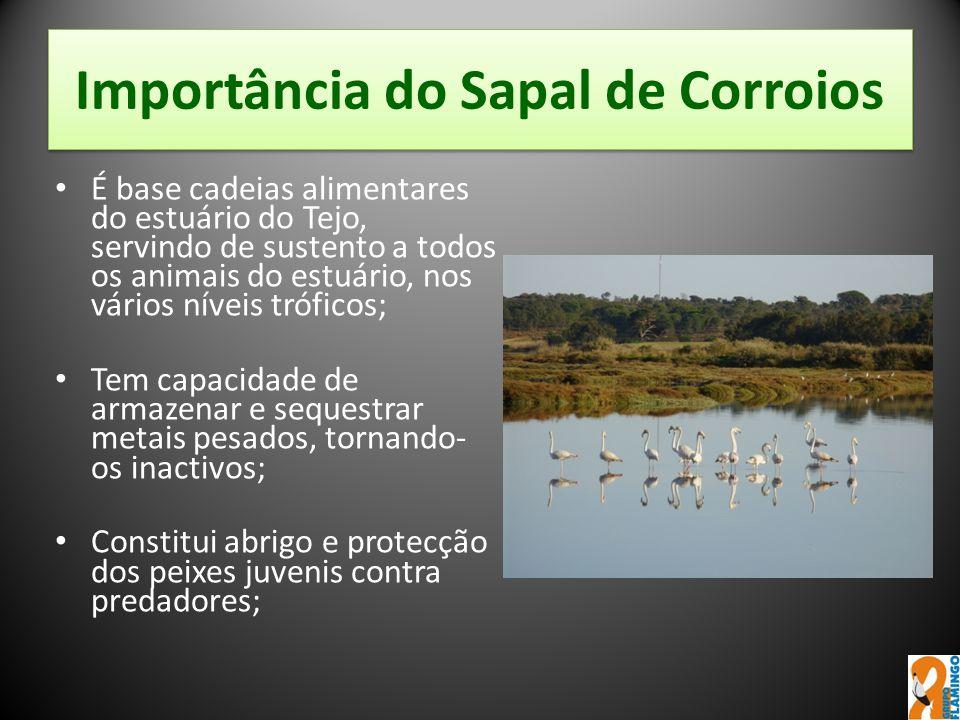 Importância do Sapal de Corroios