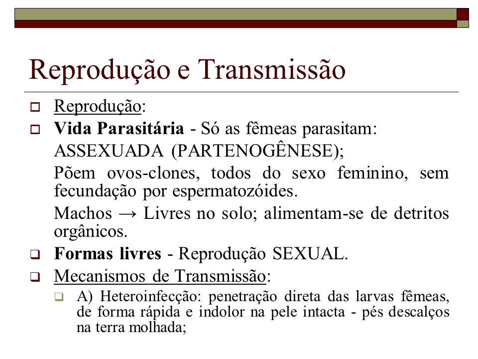 Reprodução e Transmissão
