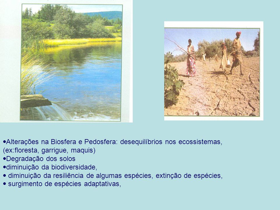 Alterações na Biosfera e Pedosfera: desequilíbrios nos ecossistemas, (ex:floresta, garrigue, maquis)