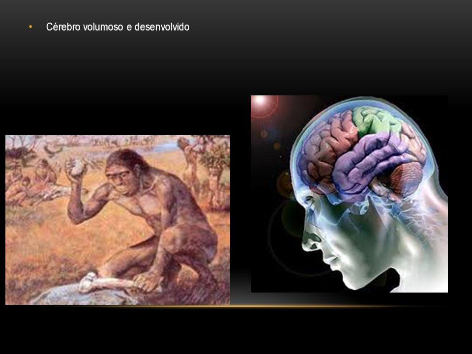 Cérebro volumoso e desenvolvido