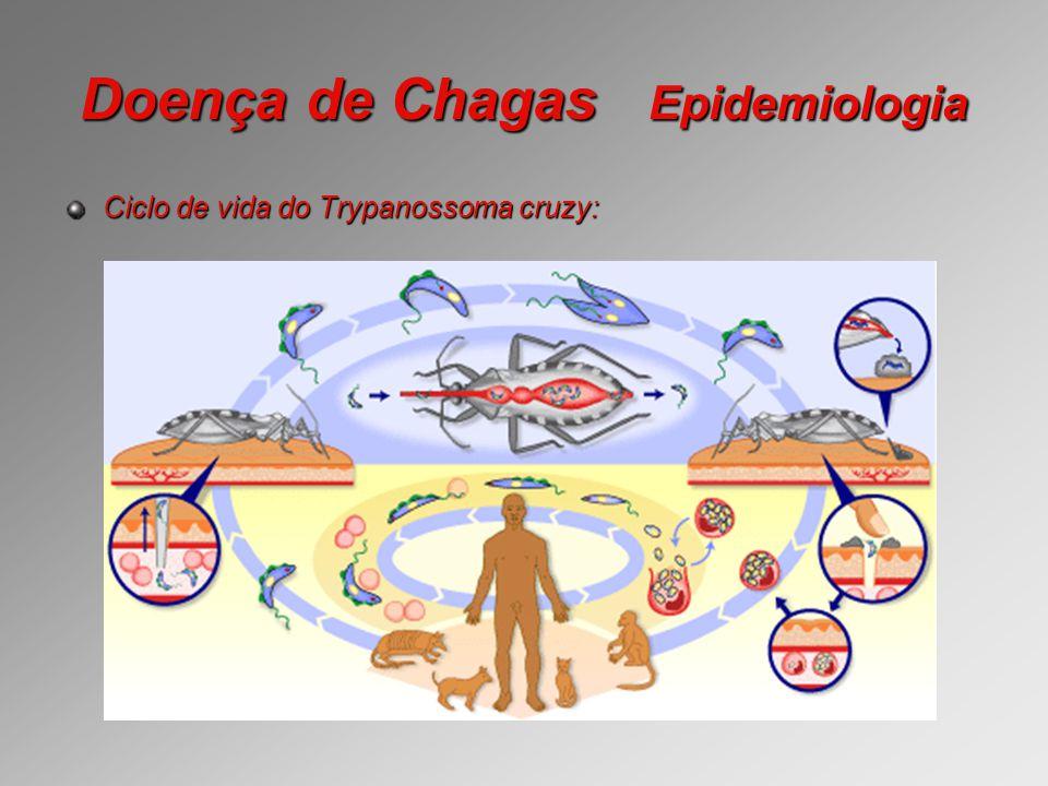 Doença de Chagas Epidemiologia