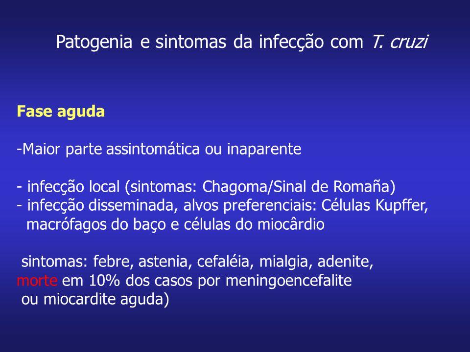 Patogenia e sintomas da infecção com T. cruzi
