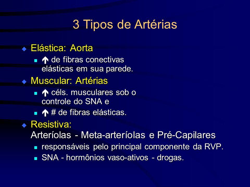 3 Tipos de Artérias Elástica: Aorta Muscular: Artérias