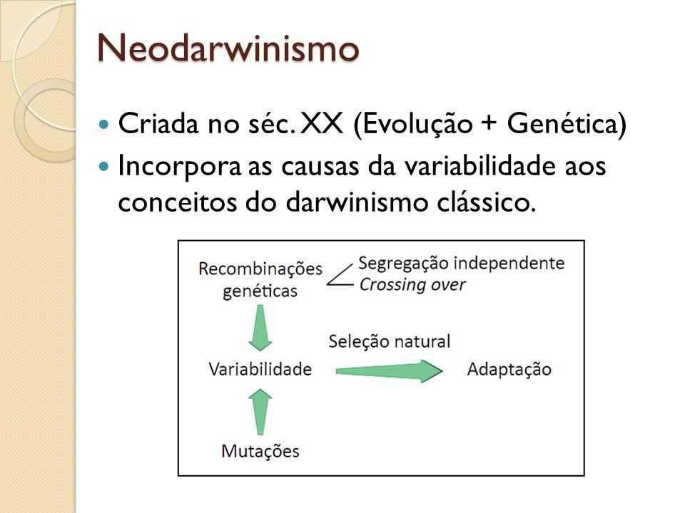 Neodarwinismo Criada no séc. XX (Evolução + Genética)
