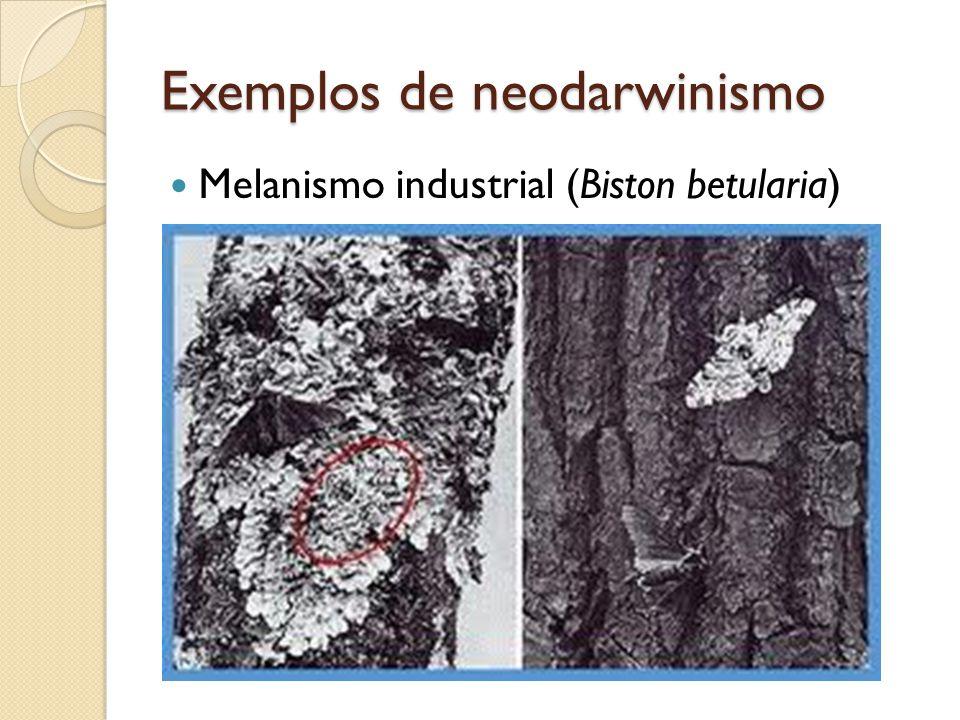 Exemplos de neodarwinismo