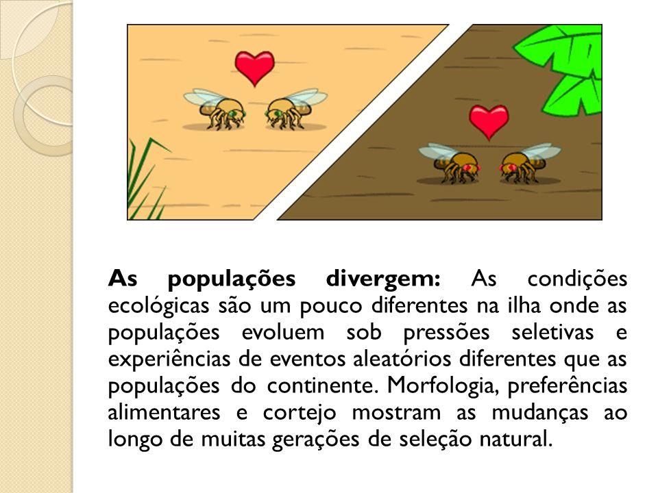 As populações divergem: As condições ecológicas são um pouco diferentes na ilha onde as populações evoluem sob pressões seletivas e experiências de eventos aleatórios diferentes que as populações do continente.