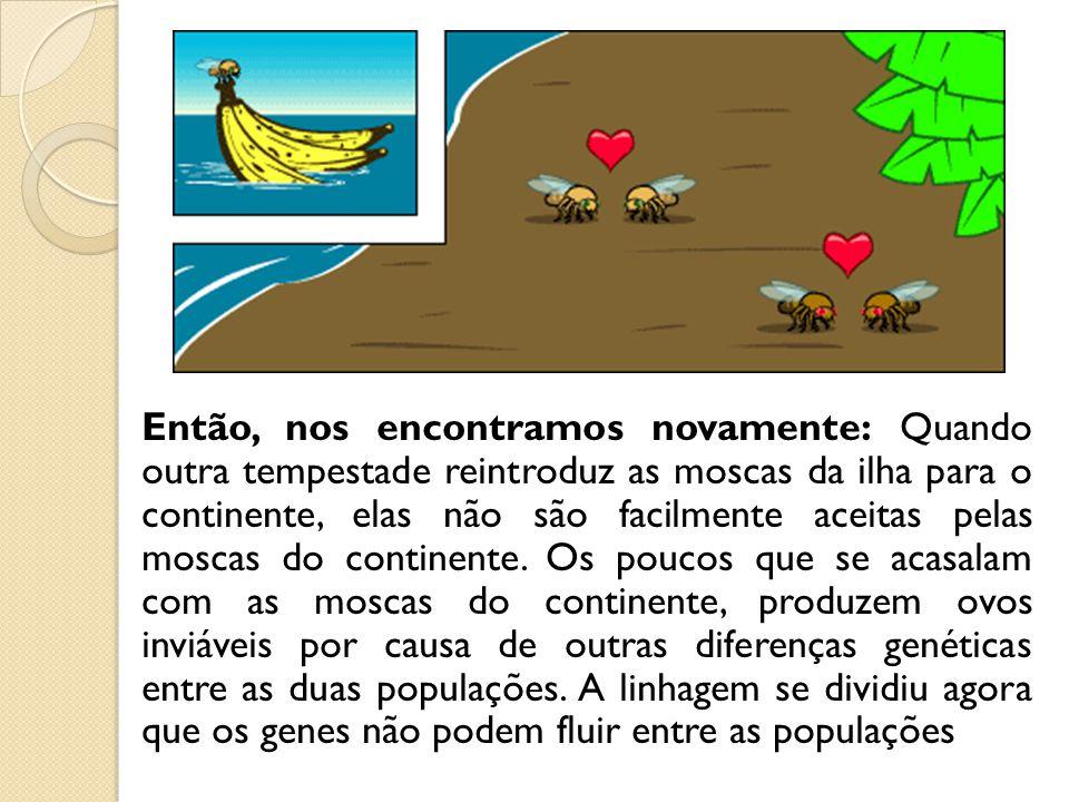 Então, nos encontramos novamente: Quando outra tempestade reintroduz as moscas da ilha para o continente, elas não são facilmente aceitas pelas moscas do continente.