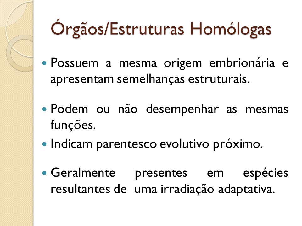 Órgãos/Estruturas Homólogas