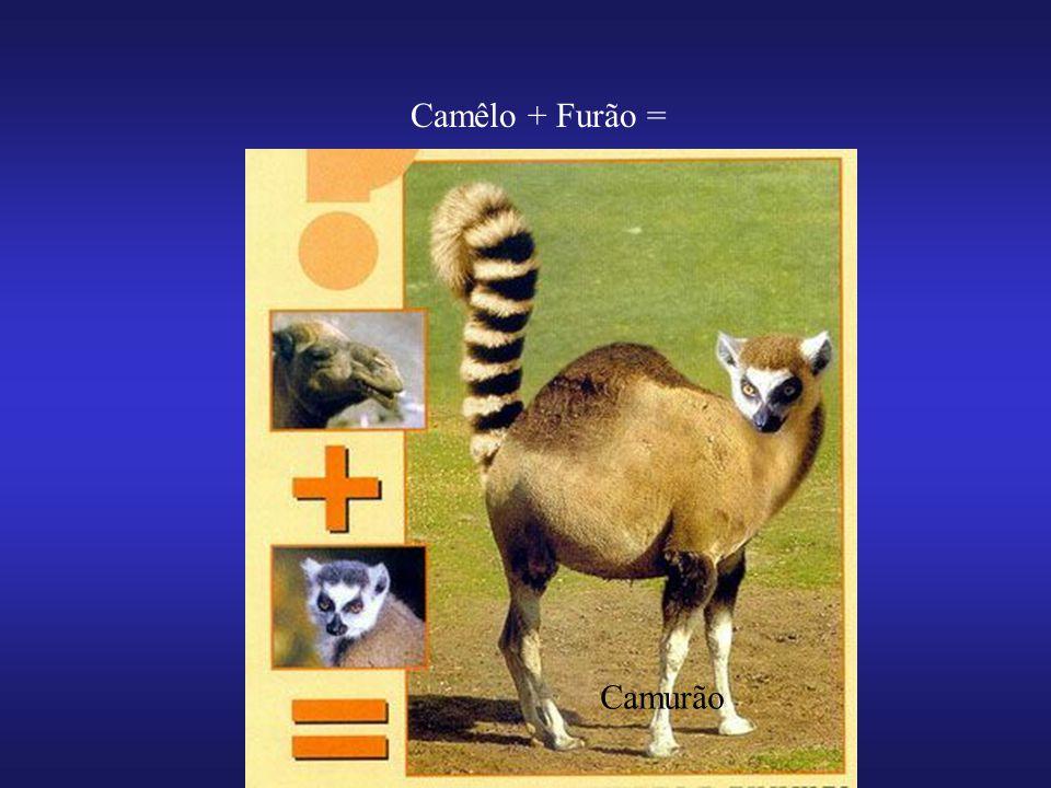 Camêlo + Furão = Camurão