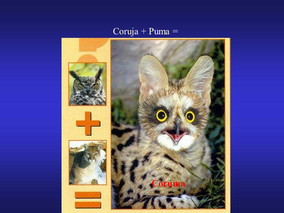 Coruja + Puma = Coruma