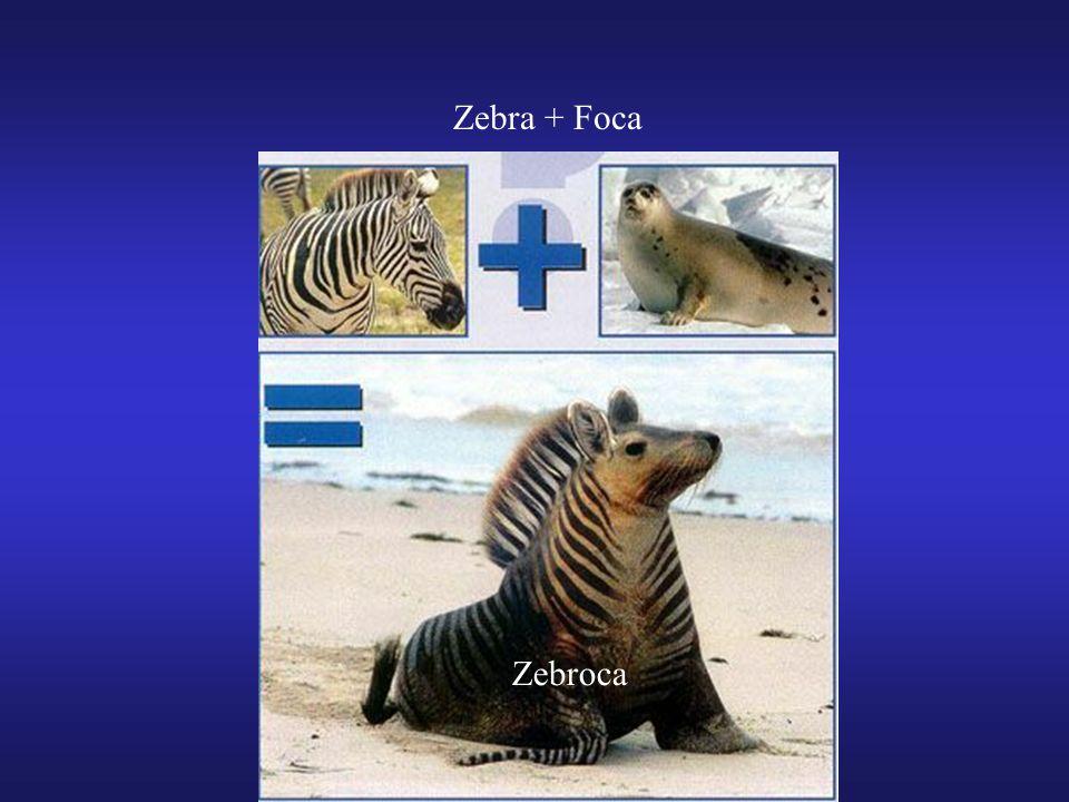 Zebra + Foca Zebroca