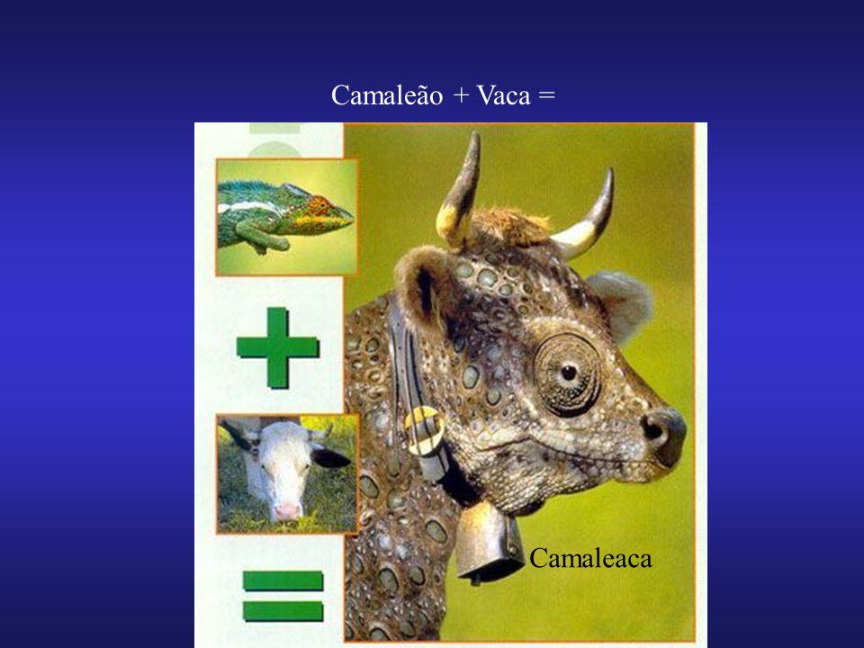 Camaleão + Vaca = Camaleaca