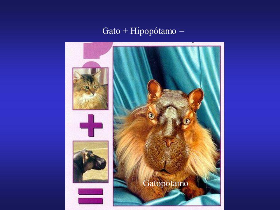 Gato + Hipopótamo = Gatopótamo