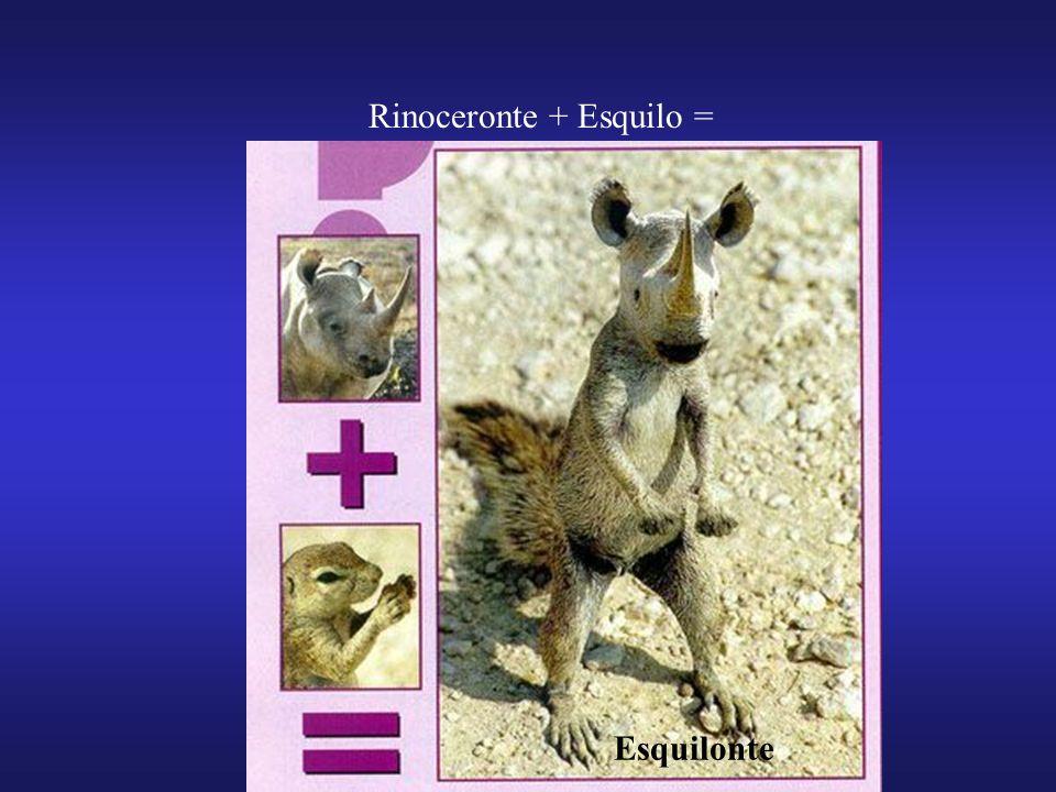Rinoceronte + Esquilo =
