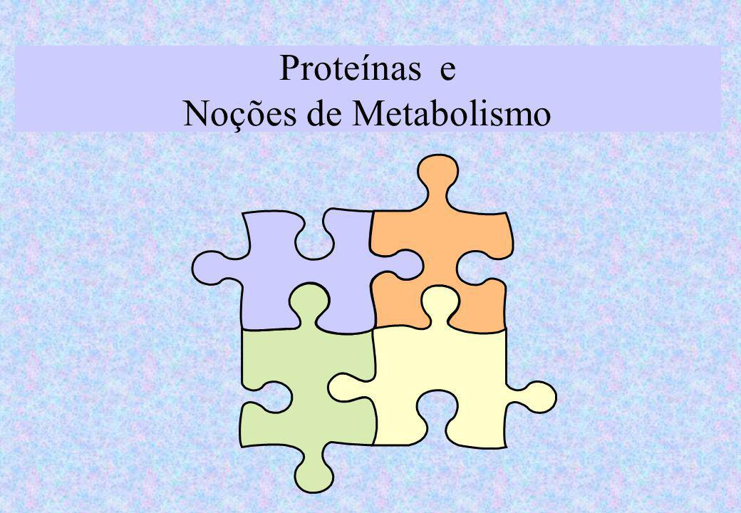 Proteínas e Noções de Metabolismo