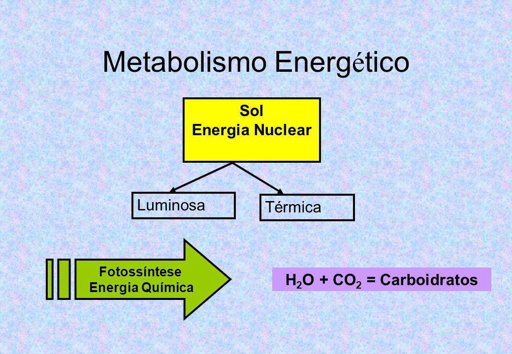 Metabolismo Energético