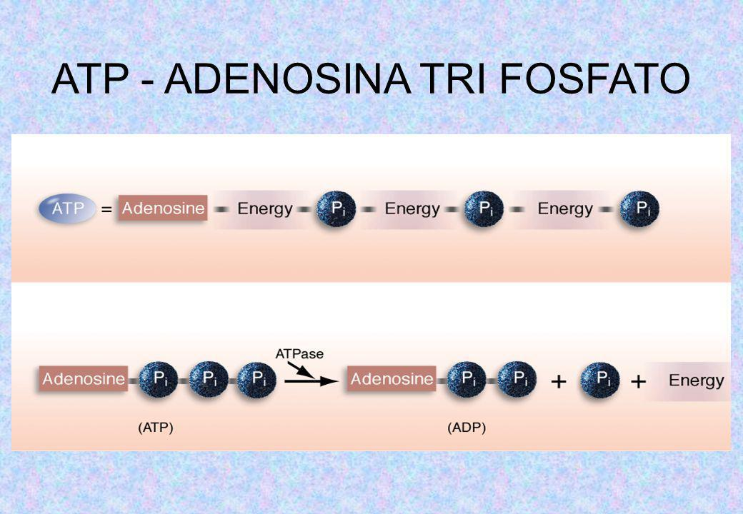 ATP - ADENOSINA TRI FOSFATO