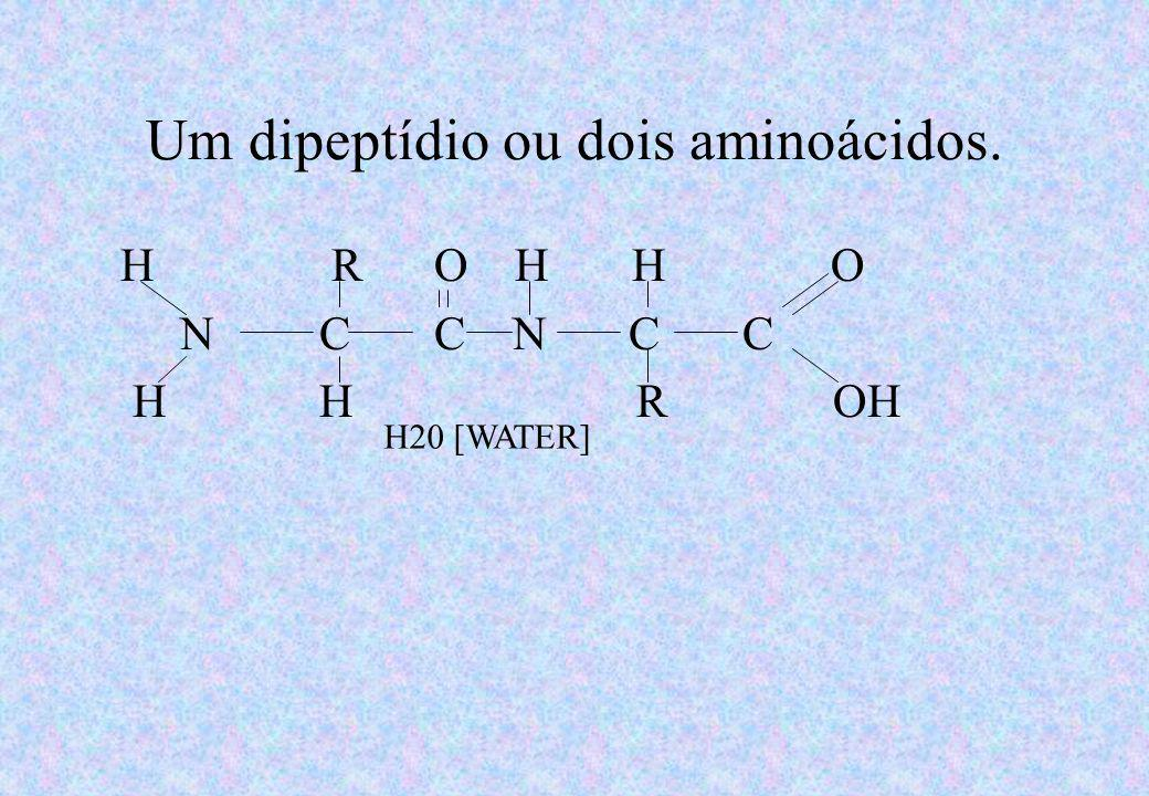 Um dipeptídio ou dois aminoácidos.