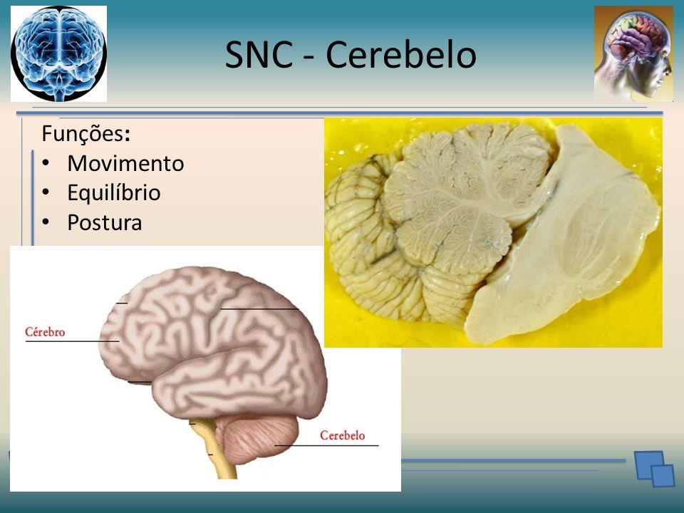 SNC - Cerebelo Funções: Movimento Equilíbrio Postura