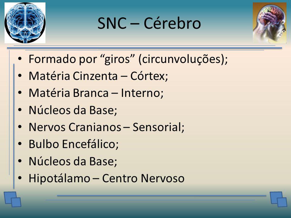 SNC – Cérebro Formado por giros (circunvoluções);