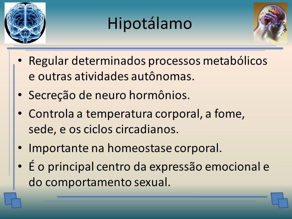 Hipotálamo Regular determinados processos metabólicos e outras atividades autônomas. Secreção de neuro hormônios.