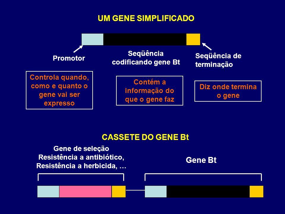 UM GENE SIMPLIFICADO CASSETE DO GENE Bt