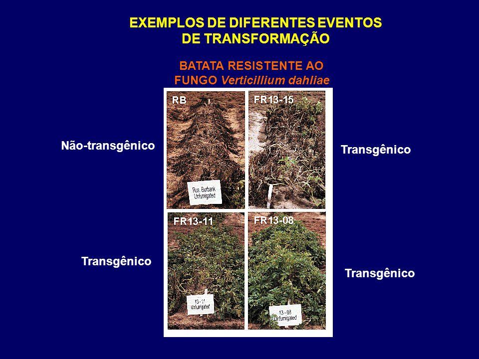 EXEMPLOS DE DIFERENTES EVENTOS DE TRANSFORMAÇÃO