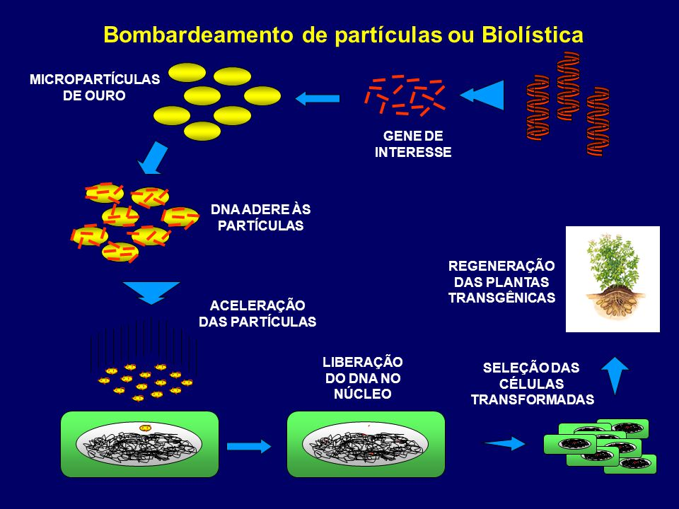 Bombardeamento de partículas ou Biolística