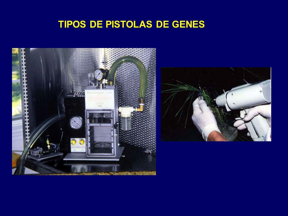 TIPOS DE PISTOLAS DE GENES