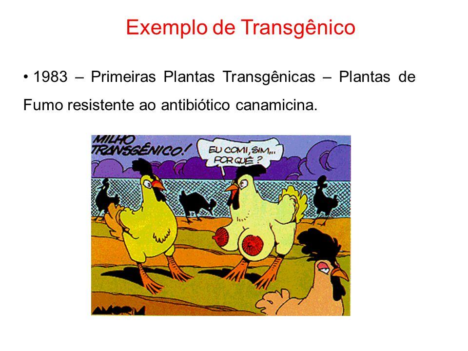 Exemplo de Transgênico