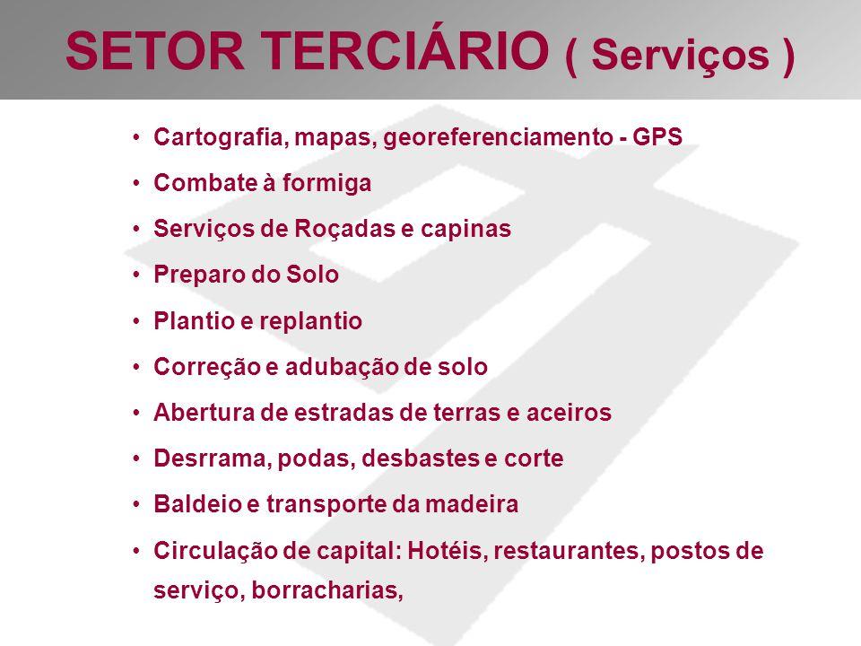 SETOR TERCIÁRIO ( Serviços )