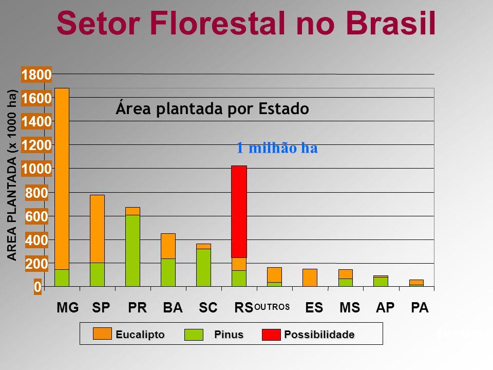 Setor Florestal no Brasil