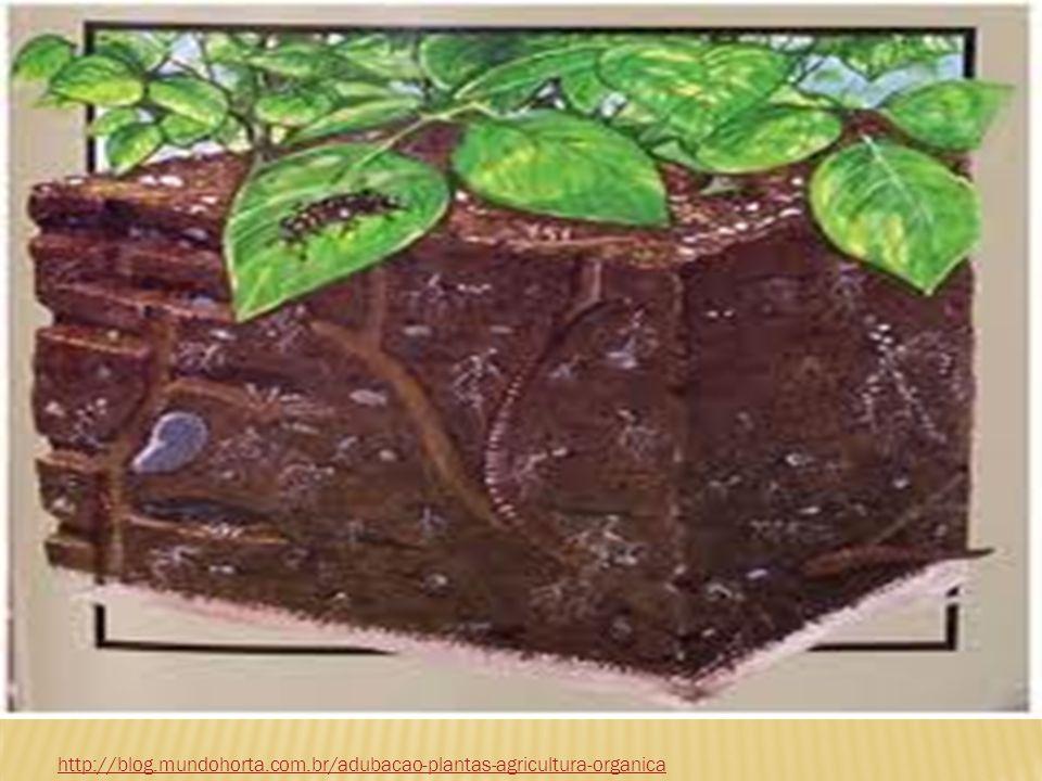http://blog.mundohorta.com.br/adubacao-plantas-agricultura-organica