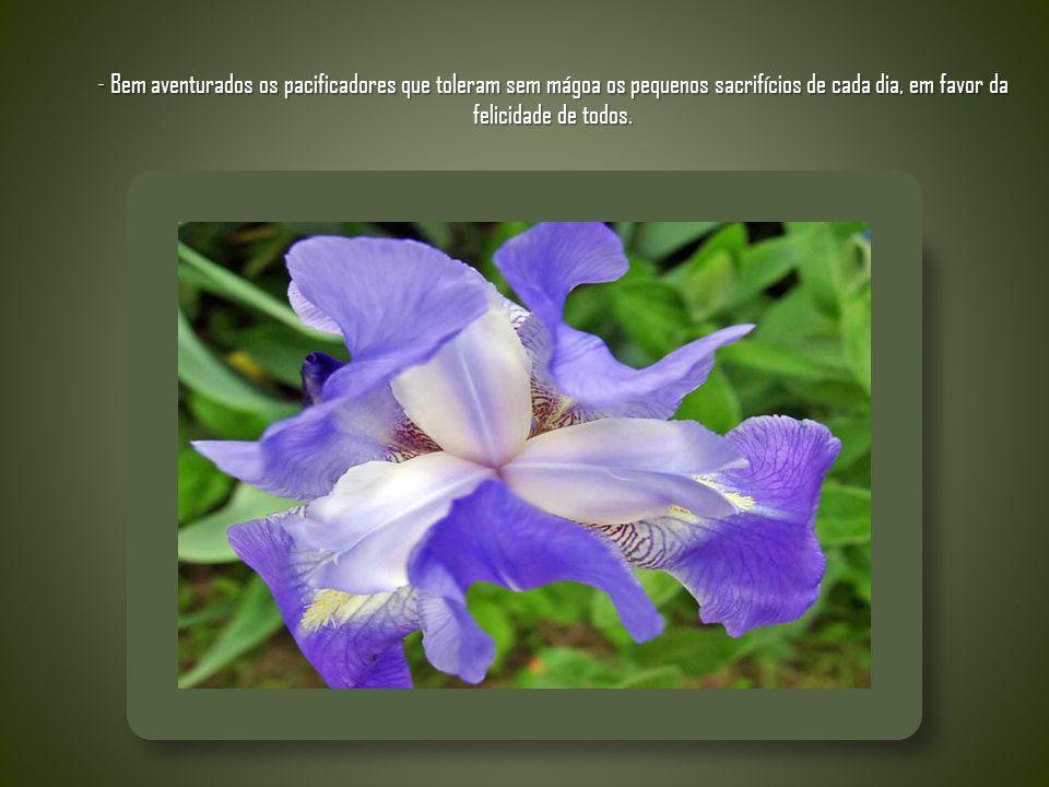 - Bem aventurados os pacificadores que toleram sem mágoa os pequenos sacrifícios de cada dia, em favor da felicidade de todos.