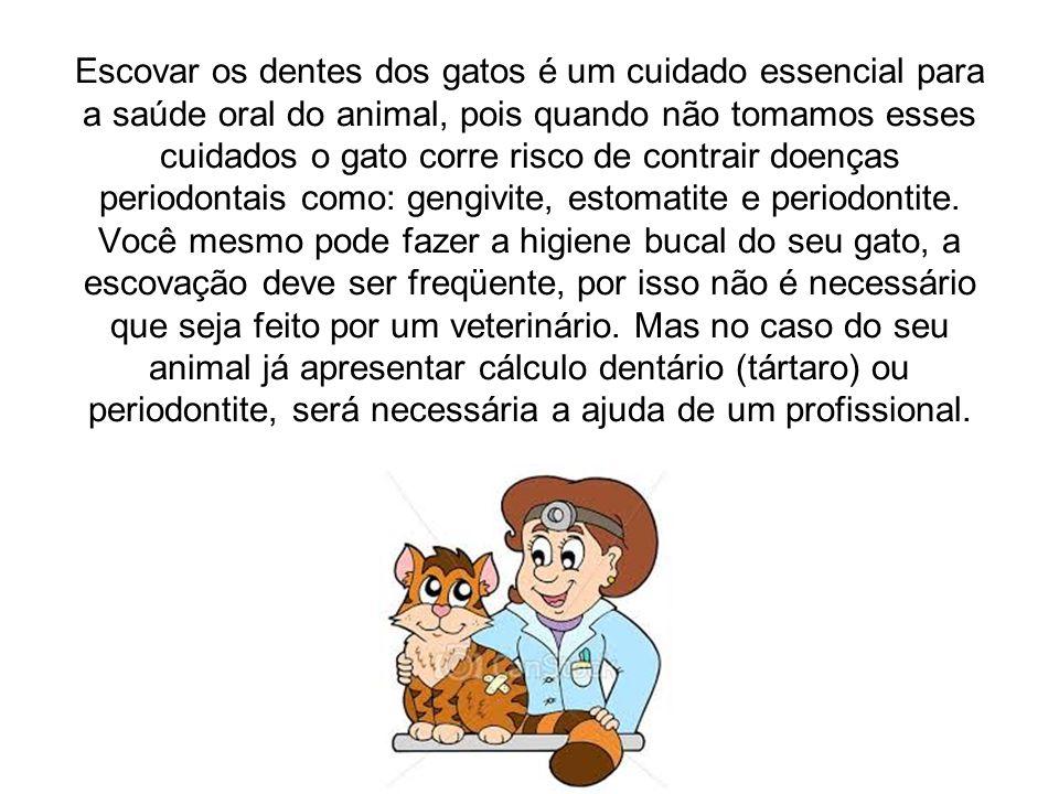 Escovar os dentes dos gatos é um cuidado essencial para a saúde oral do animal, pois quando não tomamos esses cuidados o gato corre risco de contrair doenças periodontais como: gengivite, estomatite e periodontite.
