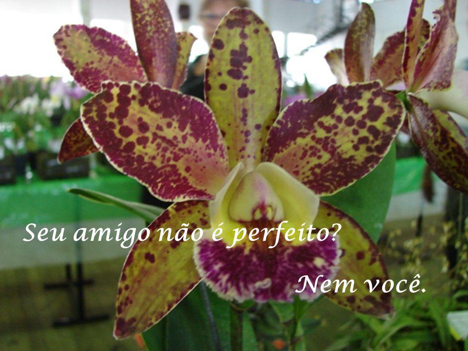Seu amigo não é perfeito