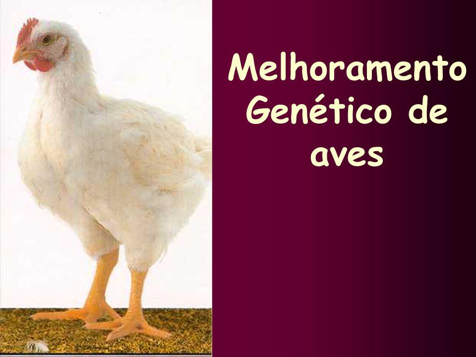 Melhoramento Genético de