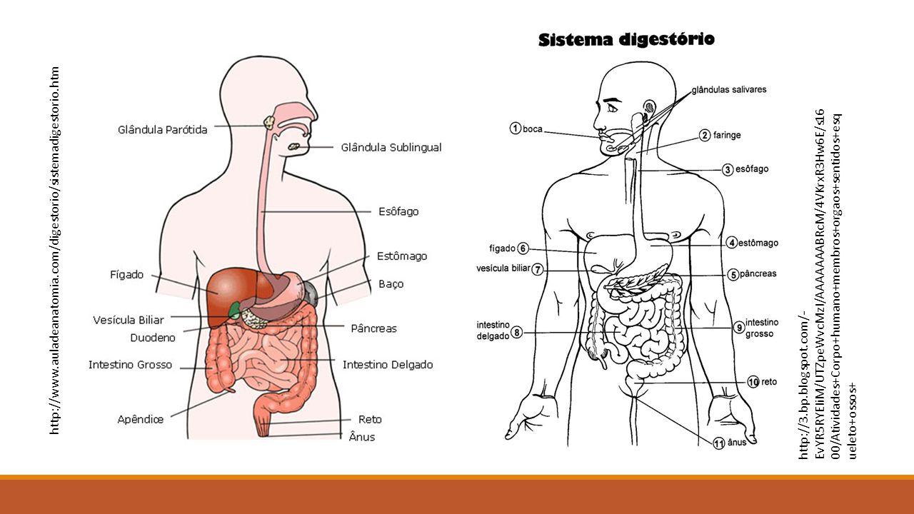 http://www.auladeanatomia.com/digestorio/sistemadigestorio.htm
