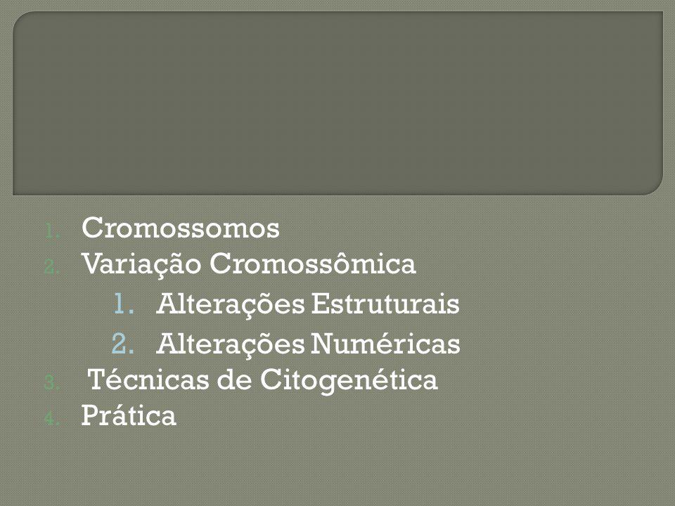 Cromossomos Variação Cromossômica. Alterações Estruturais. Alterações Numéricas. Técnicas de Citogenética.