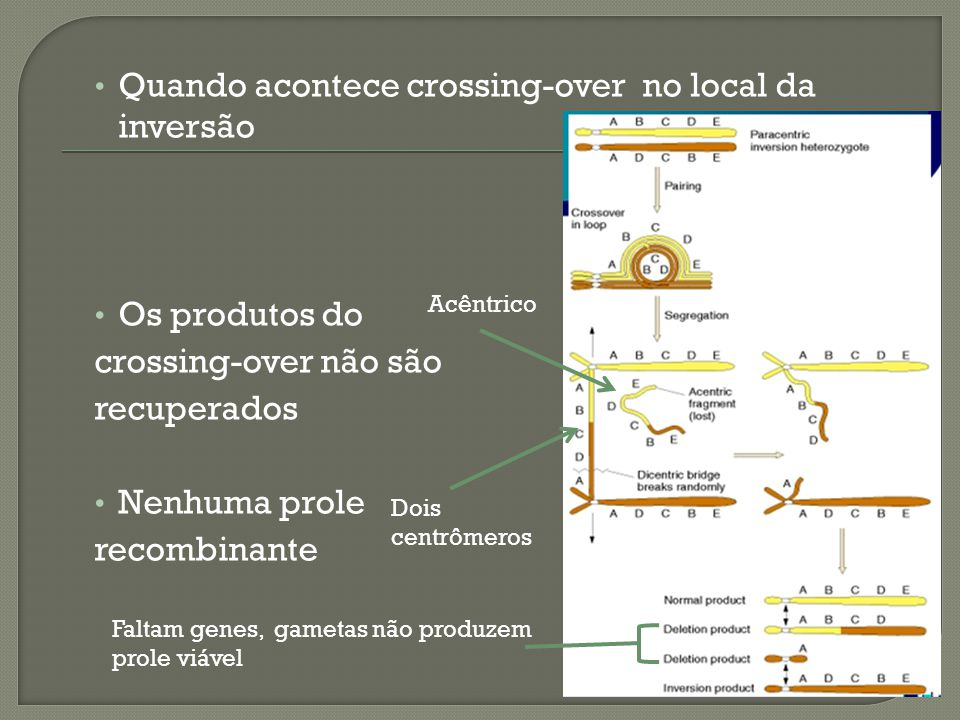 Quando acontece crossing-over no local da inversão