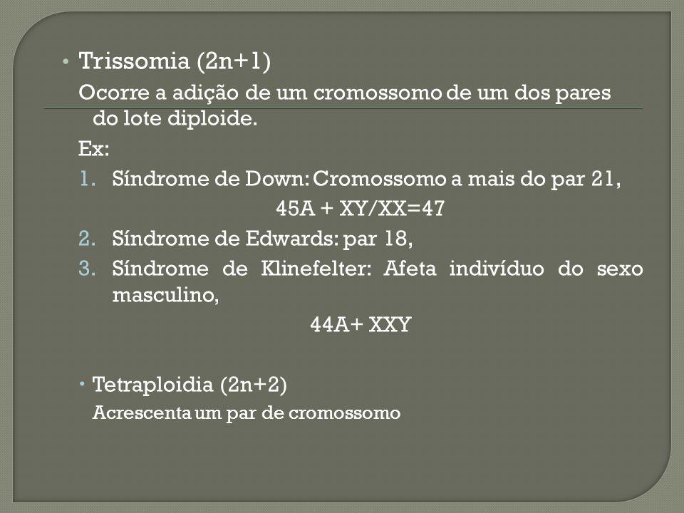 Trissomia (2n+1) Ocorre a adição de um cromossomo de um dos pares do lote diploide. Ex: Síndrome de Down: Cromossomo a mais do par 21,
