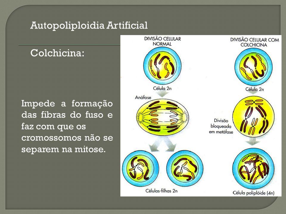 Autopoliploidia Artificial Colchicina: