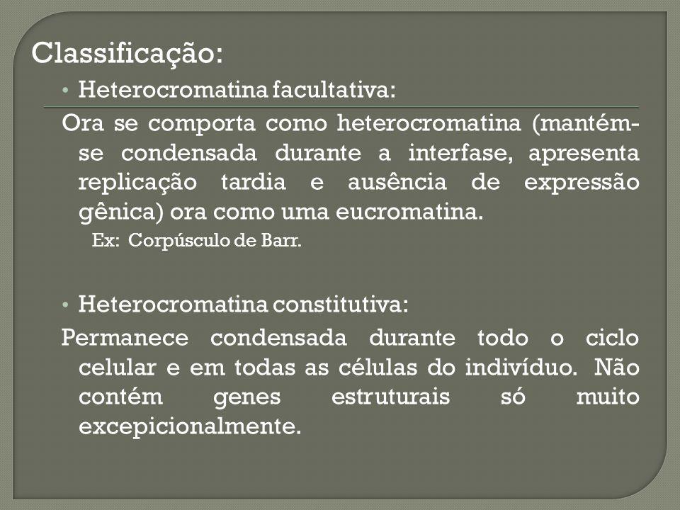 Classificação: Heterocromatina facultativa: