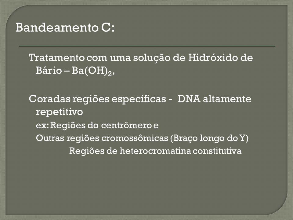 Regiões de heterocromatina constitutiva