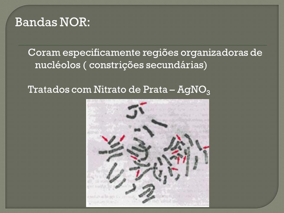 Bandas NOR: Coram especificamente regiões organizadoras de nucléolos ( constrições secundárias) Tratados com Nitrato de Prata – AgNO3.